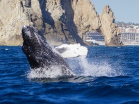 Whale & wildlife tours in Los Cabos