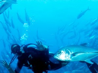 Diving in Baja's East Cape