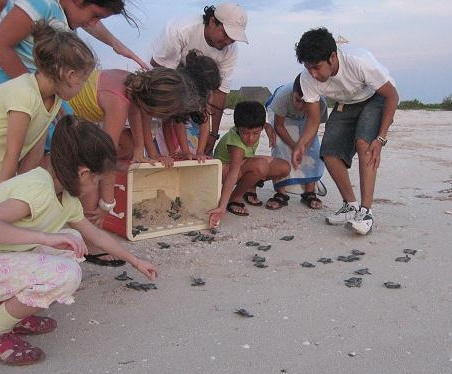 Releasing baby turtles in Celestun, Yucatan, Mexico.